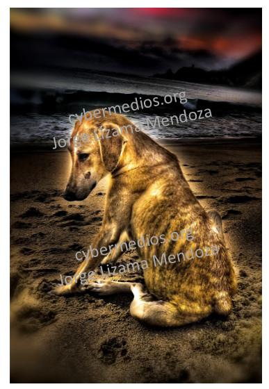cybermedios-jorge-lizama-posfotografia-art-perrito-triste